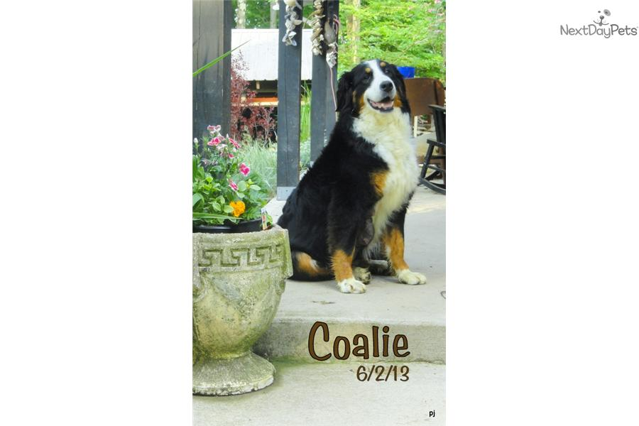 Dogs For Sale Binghamton Ny