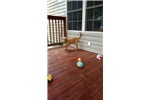 Picture of Red Labradoodle puppies 3.5 month old