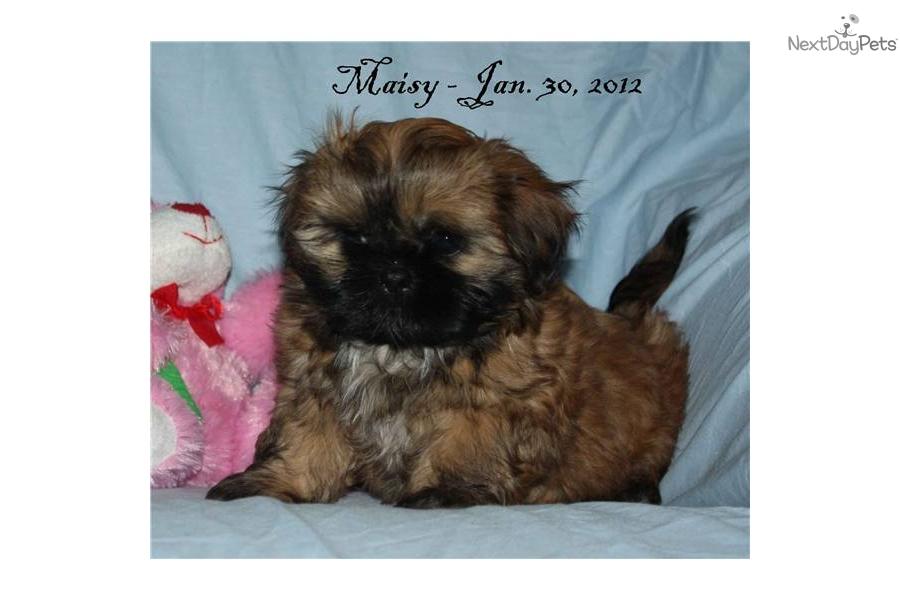 Dog Names Maisy