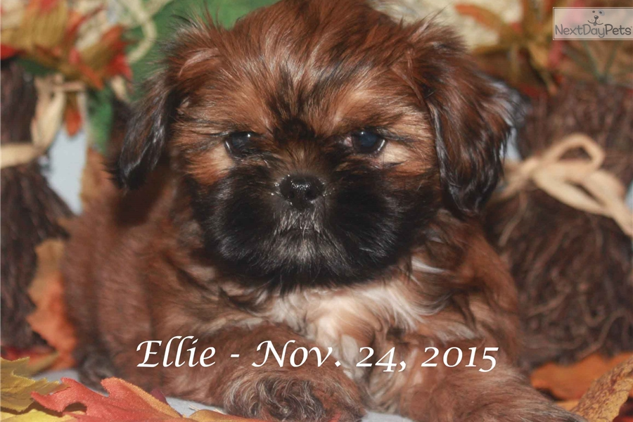 Dogs For Sale In Kirksville Mo