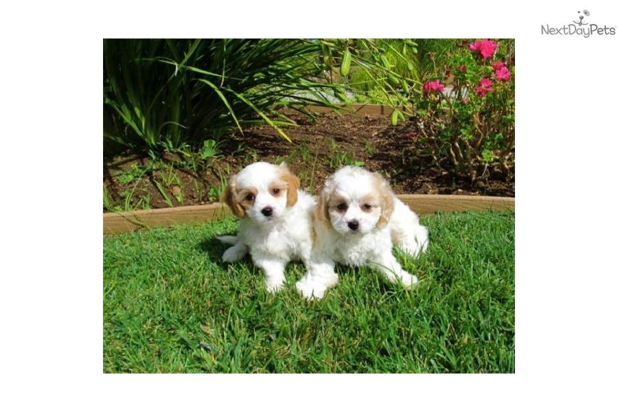 Craigslist Inland Empire Pets For Sale >> Craigslist San Bernardino Ca | Autos Post