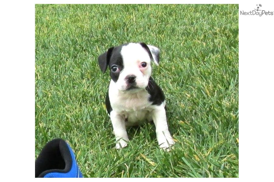 frenchton black personals Valdosta general for sale - by owner  favorite this post may 16 black masonite steel front  favorite this post may 9 frenchton puppies $900 map hide this.