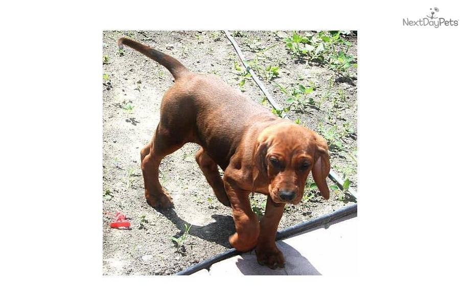 Bemidji Dog Breed