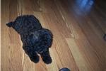 Picture of Bridget