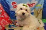 Picture of LESLIE ~ SPAYED   ~  WWW.JACOKENNEL.COM