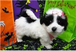 Picture of BECKA  ~ AKC REGISTERED  ~  WWW.JACOKENNEL.COM