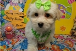 Picture of LEONA  ~ SPAYED  ~  WWW.JACOKENNEL.COM