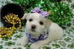 Picture of LEONA  ~ AKC REGISTERED  ~  WWW.JACOKENNEL.COM