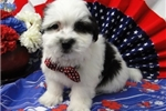 Picture of BUCKY ~ AKC REGISTERED  ~  WWW.JACOKENNEL.COM