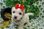 Picture of LESLIE ~ AKC REGISTERED  ~  WWW.JACOKENNEL.COM