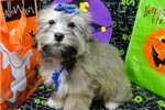 Picture of MATILDA ~ AKC REGISTERED  ~  WWW.JACOKENNEL.COM