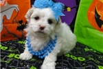 Picture of MARCIE  ~ 1ST GENERATION  ~  WWW.JACOKENNEL.COM