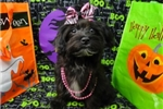 Picture of MAMIE ~ 1ST GENERATION  ~  WWW.JACOKENNEL.COM