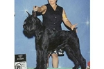 Featured Breeder of Giant Schnauzers with Puppies For Sale