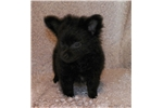 Picture of Solid Black, Little Jax
