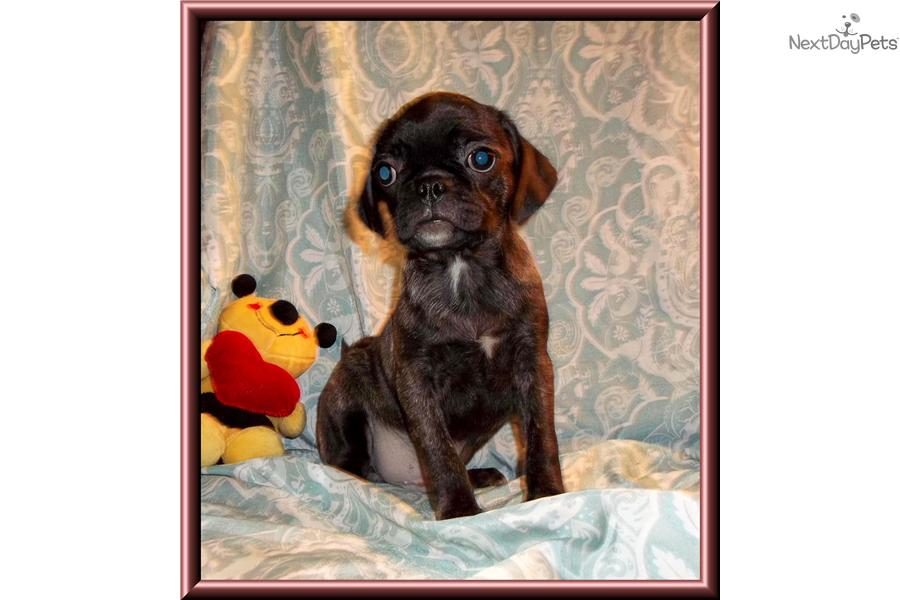 ... puppies are added receive an email alert when additional bugg puppies