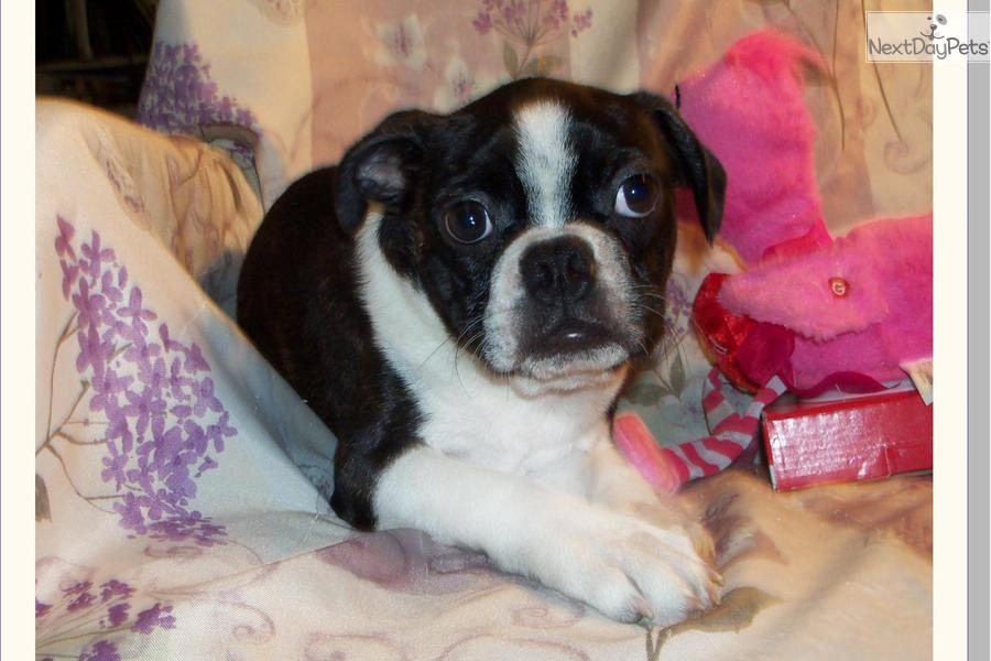 Small Dogs For Sale In Tallahassee Fl