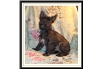 Picture of Playful Fourche Male Puppy