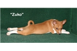 Picture of Zuko - Red & White Male Basenji AKC