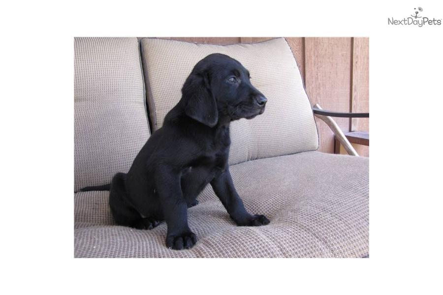 Dogs For Sale Near Fargo
