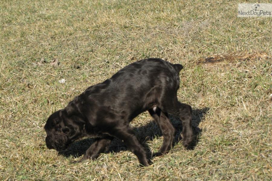 Fargo Moorhead Dog Kennels