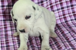 Picture of Faith's Litter