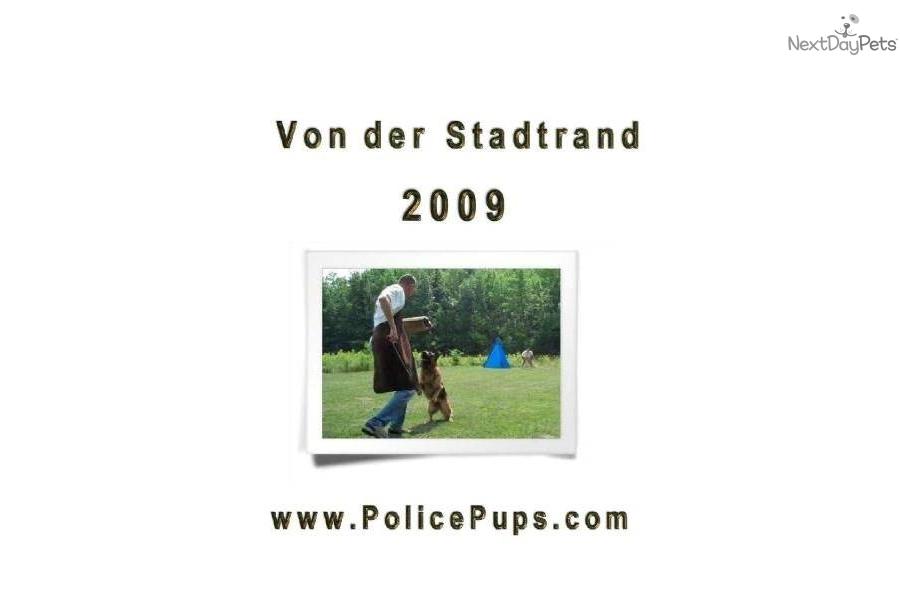 German Shepherd Breeder Show Dogs Milwaukee Wisconsin