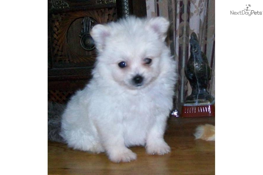 best non shedding small dogs