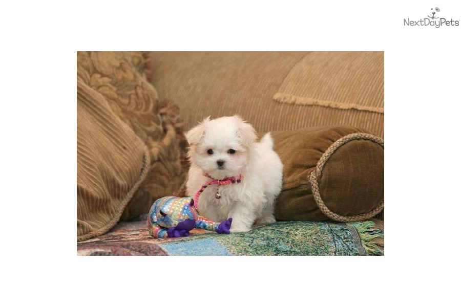 Small Dogs For Sale In Sioux City