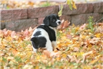 Picture of Vitro(French Brittany)