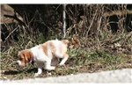 Picture of Larra (French Brittany)