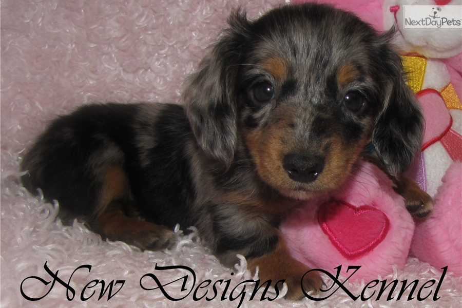 Dogs For Sale Fort Dodge Iowa