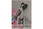 Picture of Amy - www.newdesignskennels.com