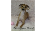 Picture of Tina - www.newdesignskennels.com