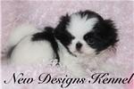 Picture of Yumi- NewDesignsKennel.com
