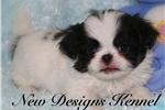 Picture of Yoda - NewDesignsKennel.com