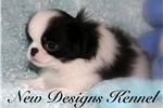 Picture of Panda - www.newdesignskennels.com