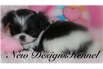 Picture of Yuki - NewDesignsKennel.com