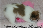 Picture of Pansy - www.newdesignskennels.com