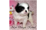 Picture of Midori - Lovely Black and White Champ Lines Girl