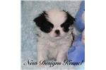 Picture of Yoko - NewDesignsKennel.com