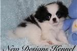 Picture of Parker - www.newdesignskennels.com