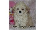 Picture of Heather - www.newdesignskennels.com