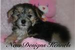 Picture of Nala - www.newdesignskennels.com