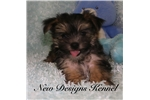 Picture of Nick - www.newdesignskennels.com