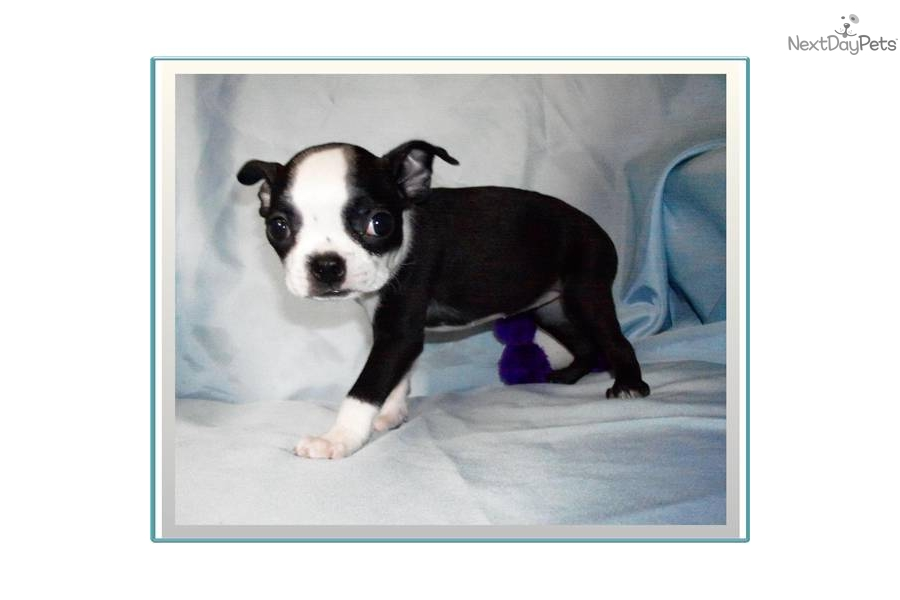 Dottie Dog Training