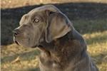 Picture of Ella 80% Blue European Female