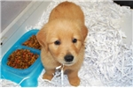 Picture of Handsome little male available