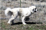 Picture of Wyoming Ranch Guardian or Pet