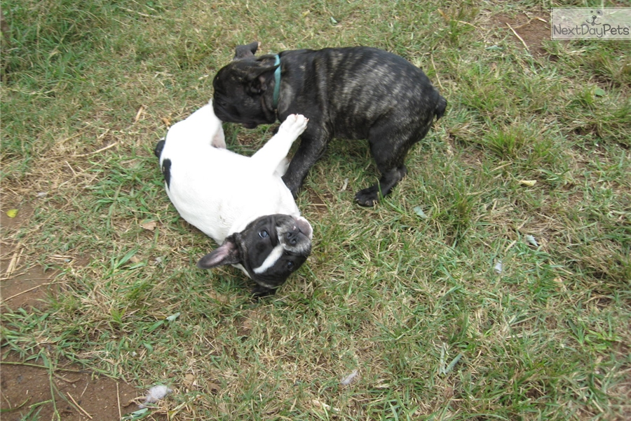 Puppies In Greenville Pa | Dog Breeds Picture
